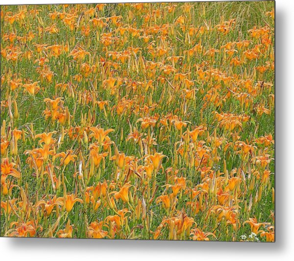 Tiger Lillies Metal Print by Luciana Seymour