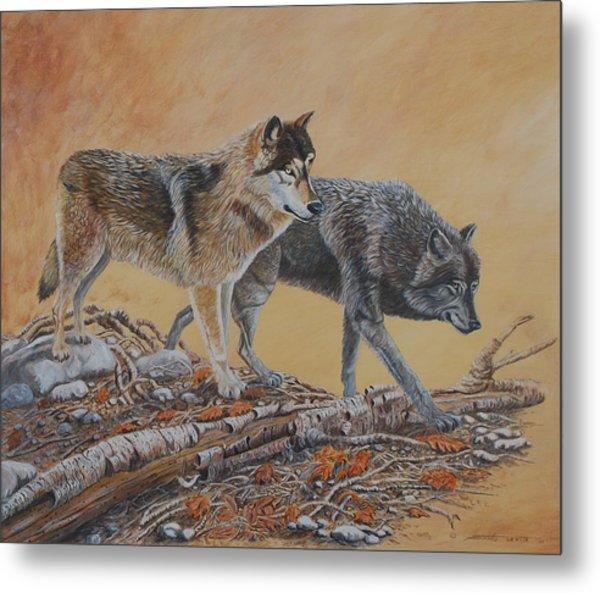 Timber Wolves Metal Print by Santo De Vita
