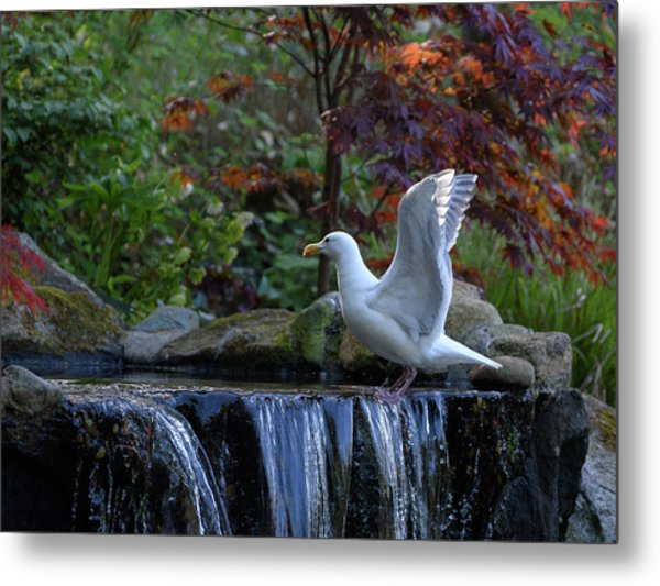 Time For A Bird Bath Metal Print