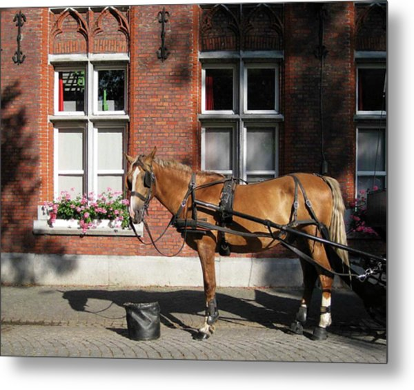 Time To Rest Metal Print by David L Griffin