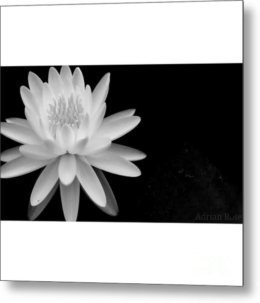Black And White -timeless Lily Metal Print