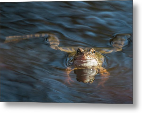 Timeout From The Annual Frog Ball Metal Print