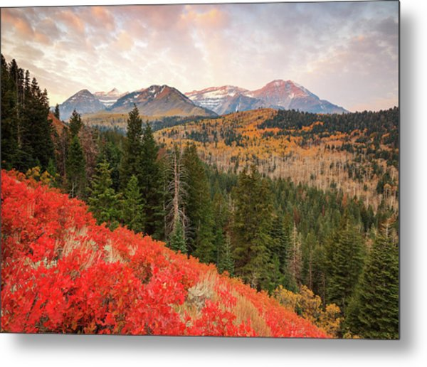 Timp With Red Oak Metal Print by Johnny Adolphson
