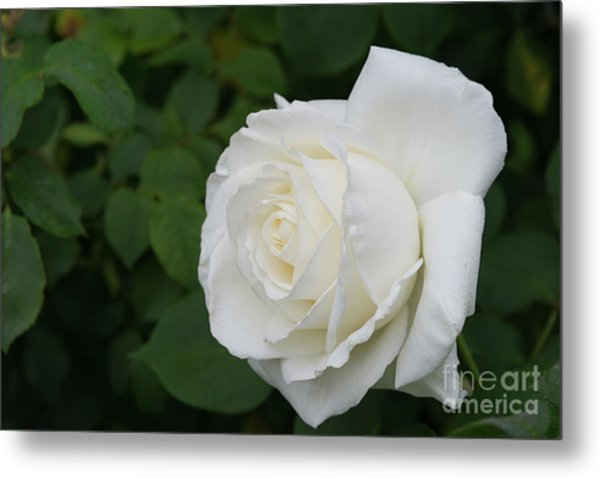 Tineke Rose 3 Metal Print