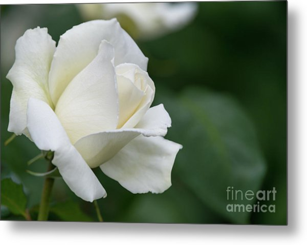 Tineke Rose 5 Metal Print