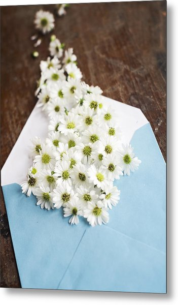 Tiny Daisies Spilling From Blue Envelope Metal Print