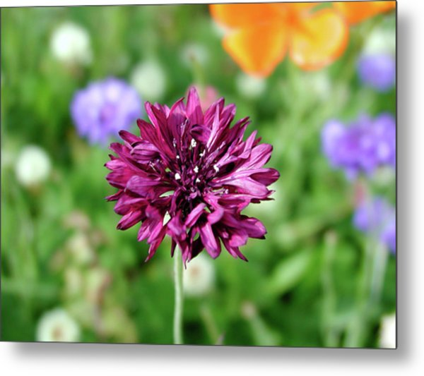 Tiny Flower Metal Print