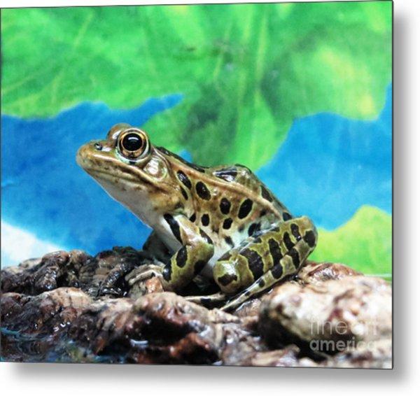 Tiny Frog Metal Print