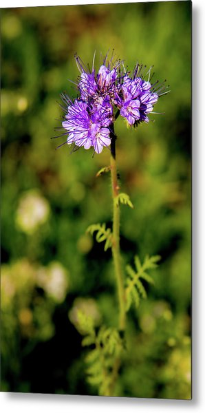 Metal Print featuring the photograph Tiny Puprle Flowers by Onyonet  Photo Studios