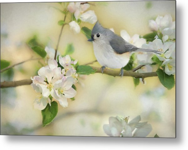 Titmouse In Blossoms 2 Metal Print