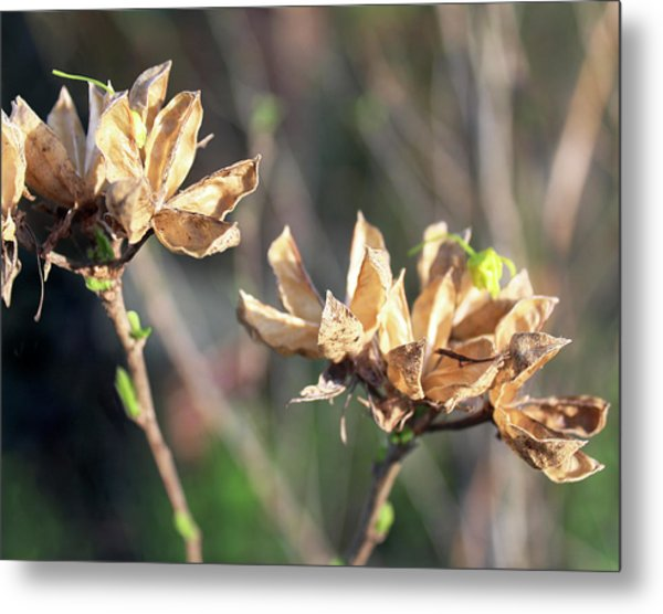 Toasted Metal Print