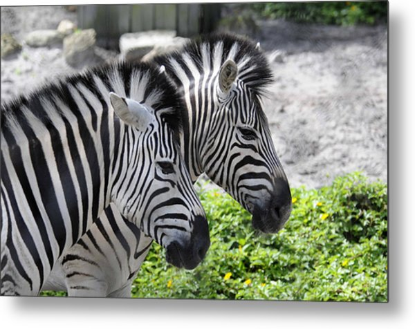 Together Metal Print by Keith Lovejoy