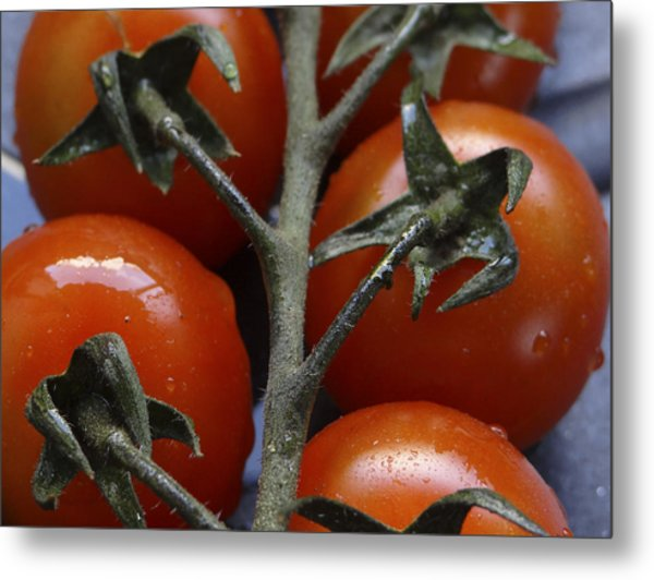 Tomato Metal Print by Angela Aird