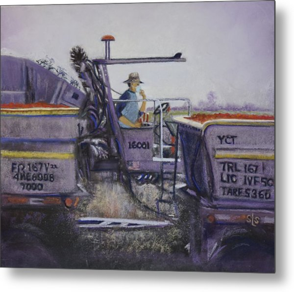 Tomato Harvest Time Metal Print