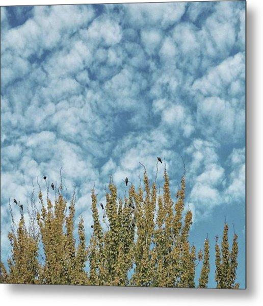 Top Pigeons #birds #pigeon #trees #sky Metal Print