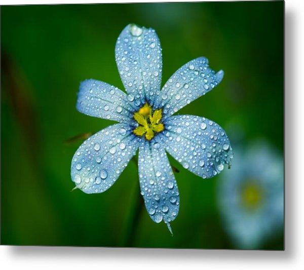 Top View Of A Blue Eyed Grass Flower Metal Print