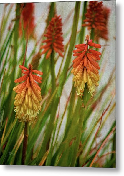 Torch Lily At The Beach Metal Print