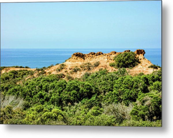 Torrey Pines California - Chaparral On The Coastal Cliffs Metal Print