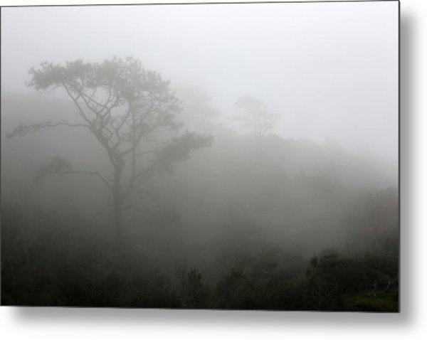 Torrey Pines With Coastal Fog Metal Print by Robin Street-Morris