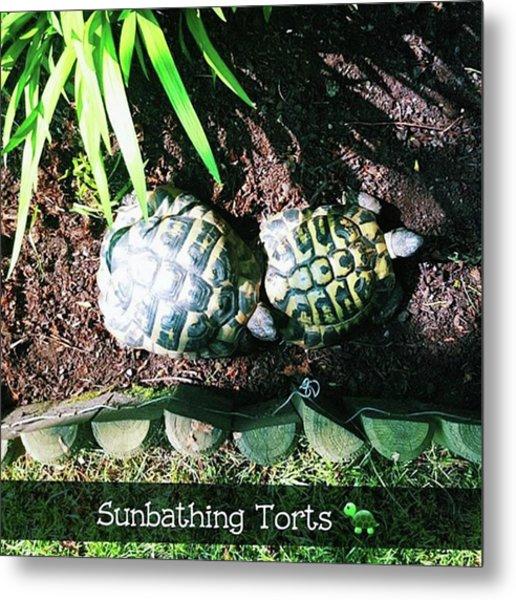 #tortoise #torts #sunbathing #garden Metal Print by Natalie Anne