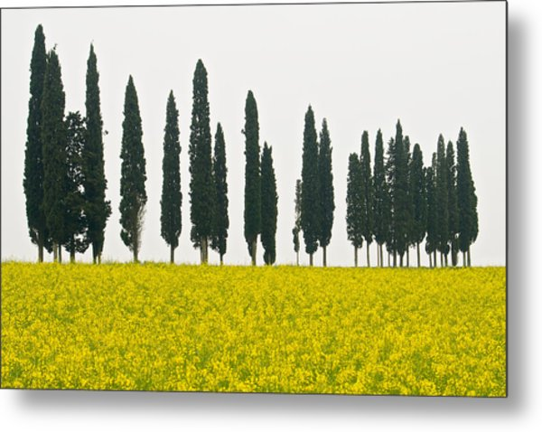 Toscana Cypresses Metal Print by Igor Voljch