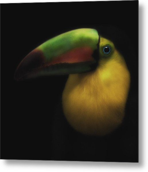 Toucan On Black Metal Print