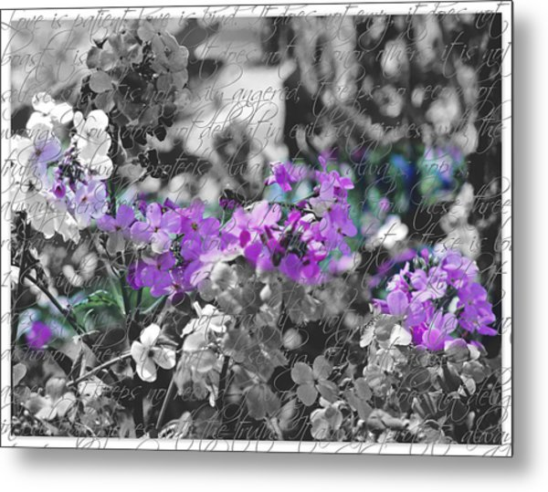 Touch Of Phlox Metal Print