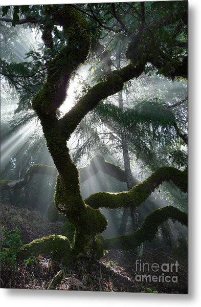 Touched By A Miracle Metal Print by JoAnn SkyWatcher