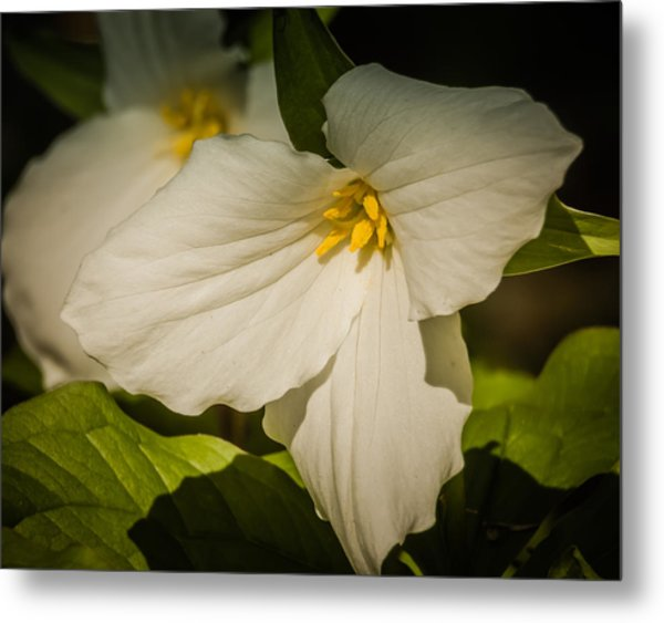 Touched By A Trillium Metal Print