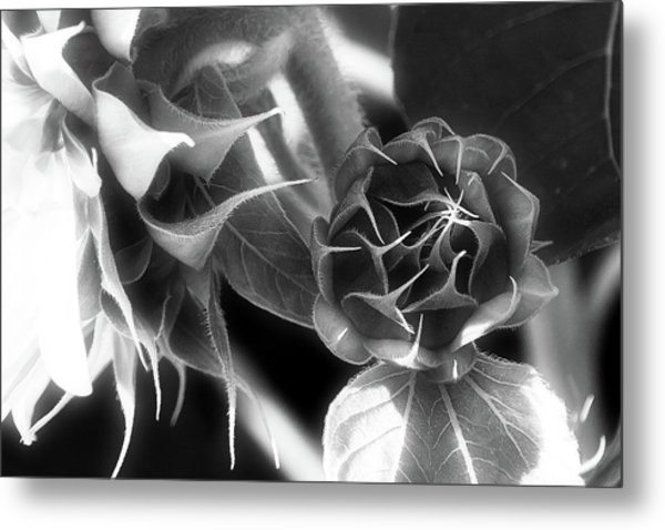Touched By Light - Metal Print