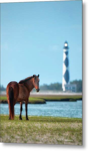 Tour Guide Cape Lookout 3509 Metal Print