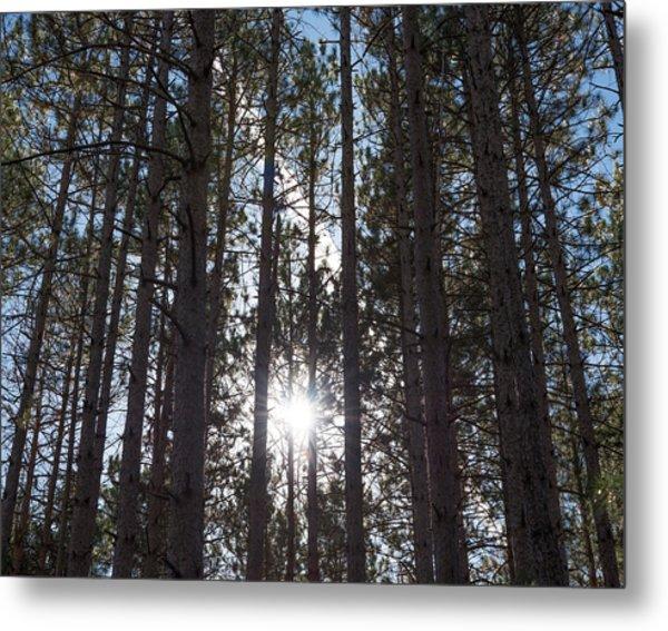 Towering Pines Metal Print