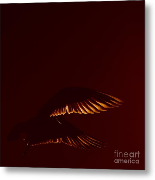 Transiently Translucent Metal Print