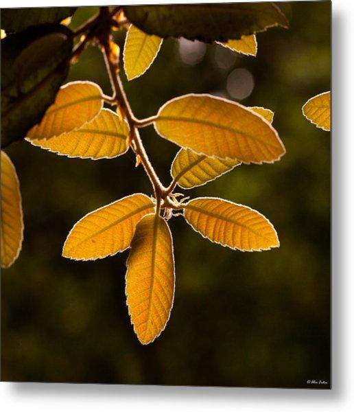 Translucent Leaves Metal Print