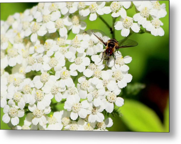Transverse Flower Fly Metal Print