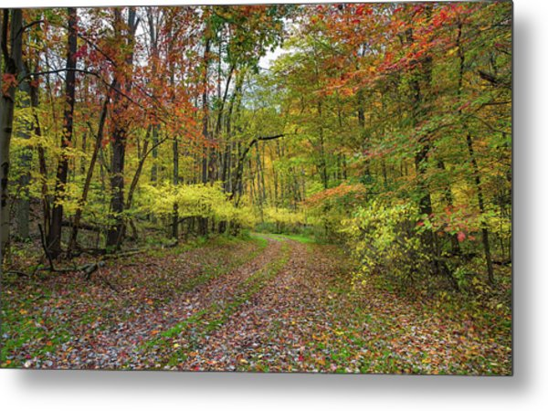 Travels Through Autumn Metal Print