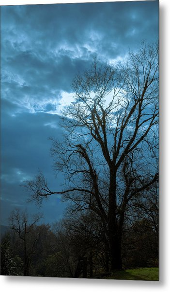 Tree # 23 Metal Print