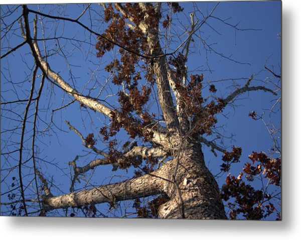 Tree And Branch Metal Print