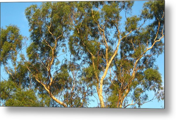 Tree And Sky Metal Print