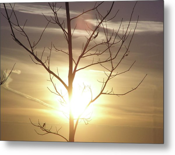 Tree And Sun Metal Print by Richard Mitchell