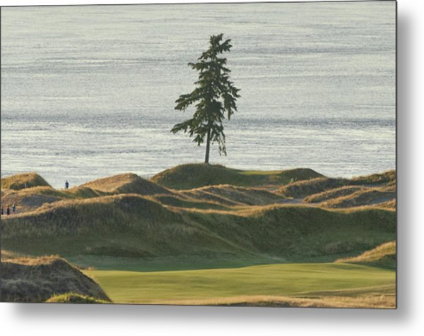 Tree At Chambers Bay Metal Print