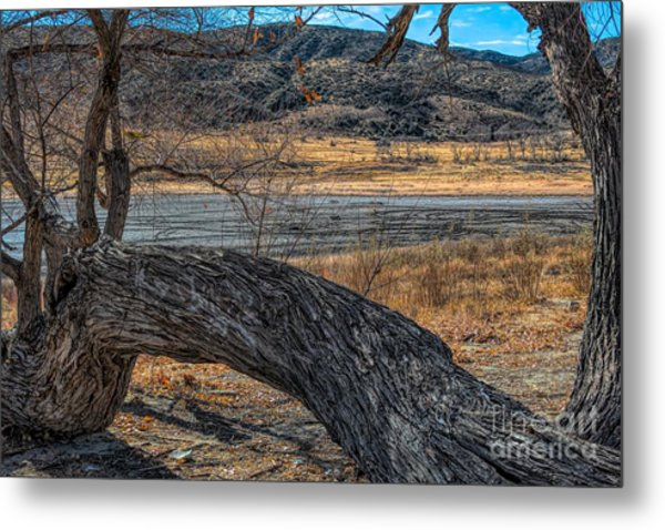 Tree At Elizabeth Lake Metal Print