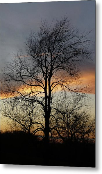 Tree At Sunset Metal Print by Jerry Weinstein