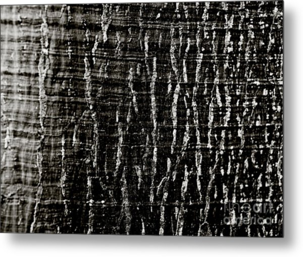 Tree Bark Metal Print