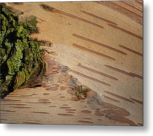 Tree Bark With Lichen Metal Print