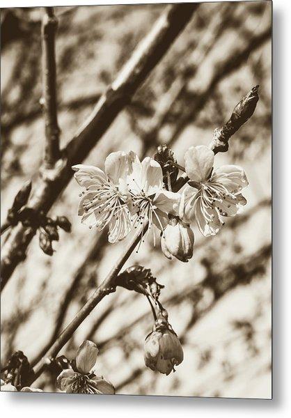 Metal Print featuring the photograph Tree Blossom C by Jacek Wojnarowski