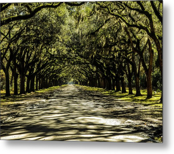 Tree Covered Approach Metal Print