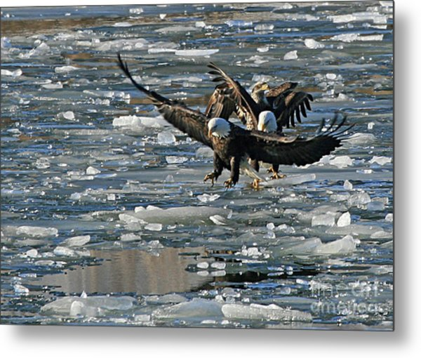 Tree Eagles On Ice Metal Print