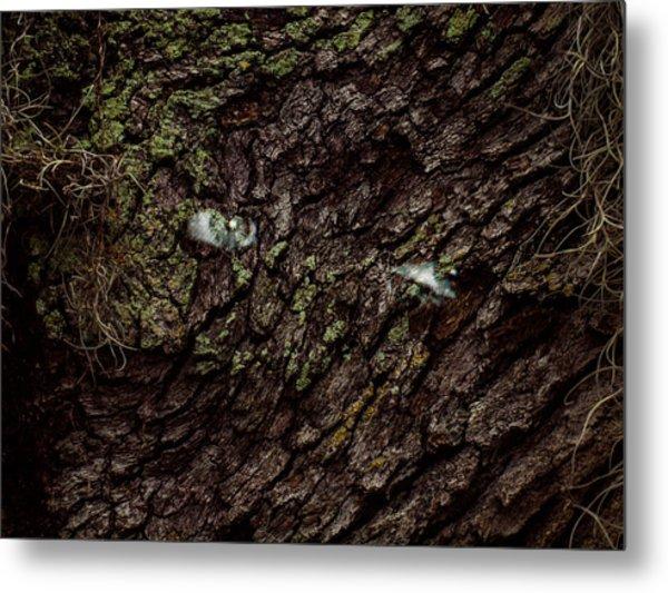 Tree Eyes Metal Print