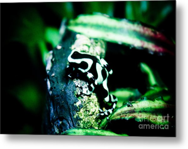 Tree Frog Metal Print by Brenton Woodruff